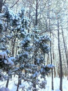 snow-edit
