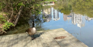A visit with the ducks.